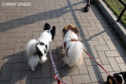 一緒にお散歩♪