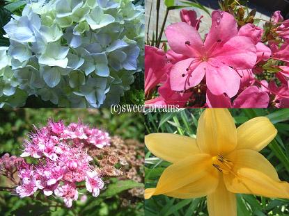 お花の季節☆