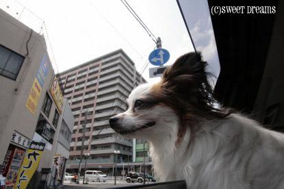 街中ドライブ中。