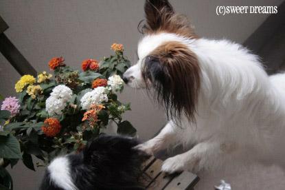 初お花盗み食い。