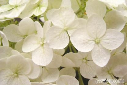 お花も白くなりました♪