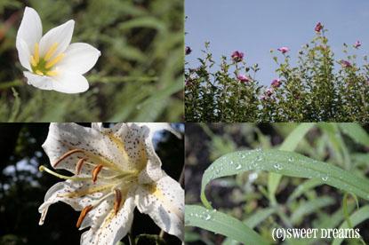 大磯城山公園のお花♪