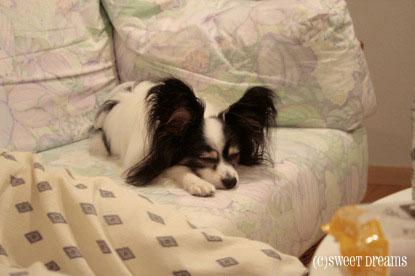 ソファ上が好みの子。