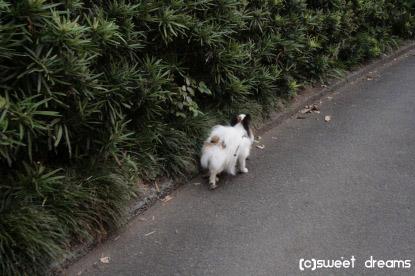 いつもと違うお散歩道