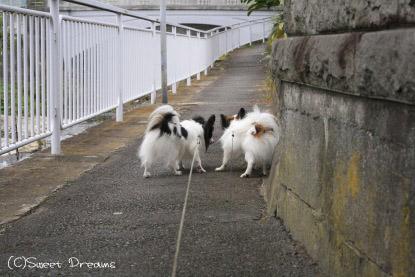 お散歩にいきました∪・ω・∪