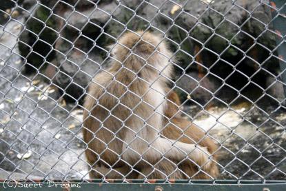 お猿さんの親子。