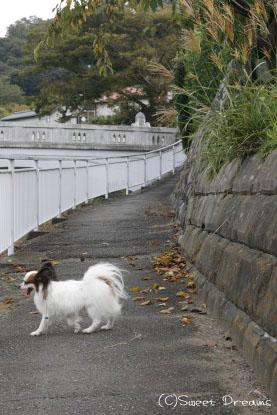 秋の散歩道♪