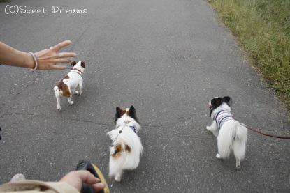 お散歩がてら河原まで!