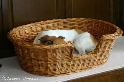 レジナのベッド♪