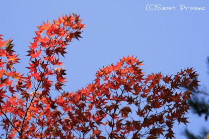 紅葉もちょっぴり。