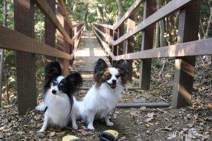 初めての細い橋。
