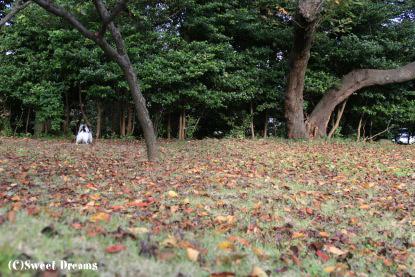 地面には一面の落ち葉。