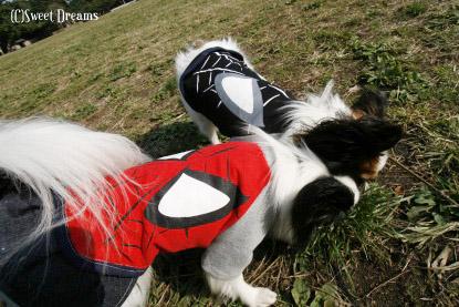 いい蜘蛛と悪い蜘蛛。