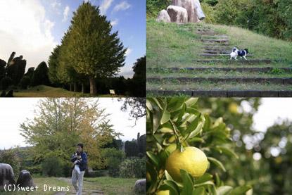 辻村植物公園。