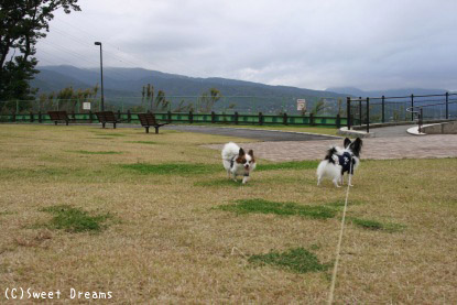 おだわら諏訪の原公園。