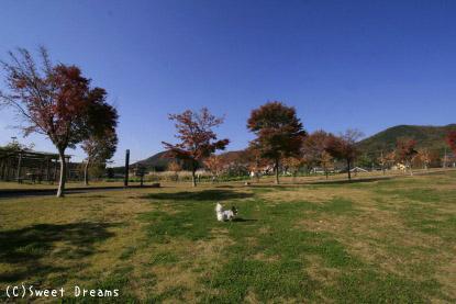 広~い芝生♪