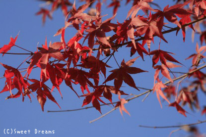 紅葉×青空