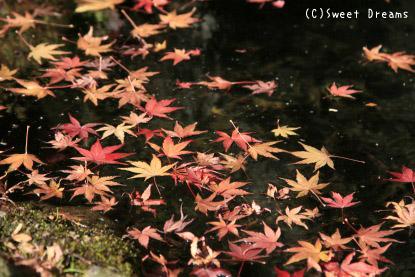 池に浮かぶ紅葉。