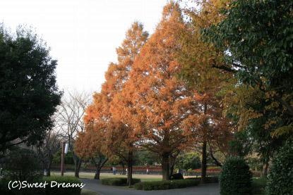 紅葉の大庭城址公園♪