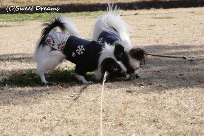 探検犬~♪