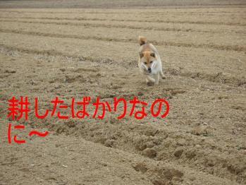 20070410155604.jpg