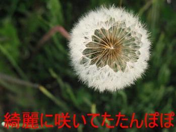 20070605141913.jpg