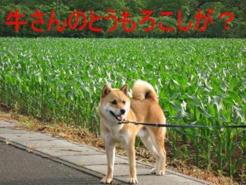 20070612133301.jpg