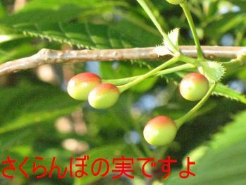 20070612133950.jpg
