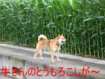 20070703125807.jpg