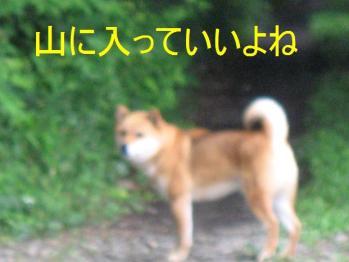 20070707132837.jpg