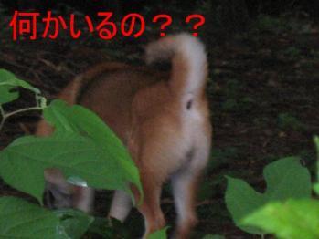 20070707132952.jpg