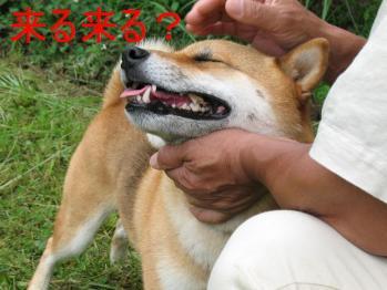20070718141349.jpg