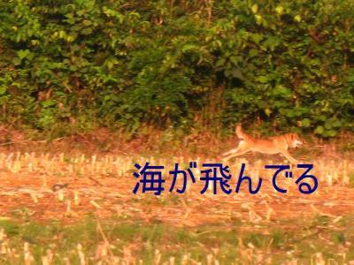 20070822124739.jpg
