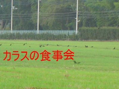 20070912124319.jpg