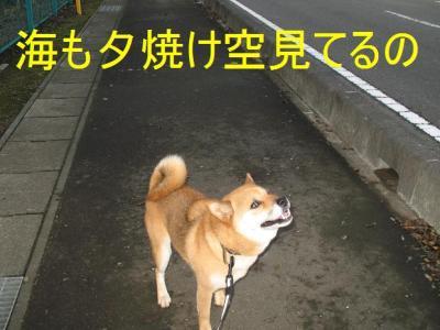 20070920125110.jpg