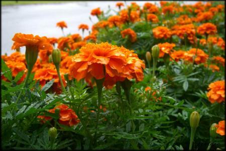 金沢城内の花