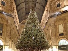 L'albero di Natale 2006