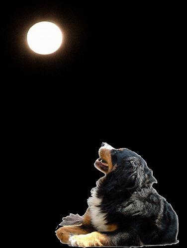 お月見ちゅ?w