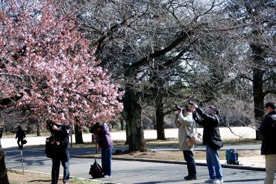 070204桜を撮る人々0076