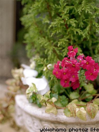 photo_20070223_002.jpg
