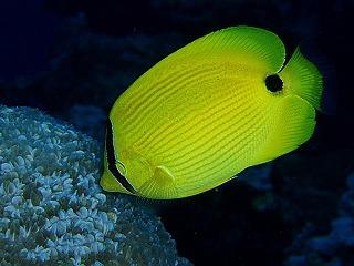 ピピ島で体験ダイビング