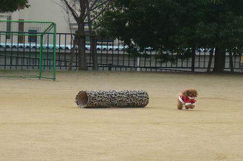 2011 12 06_セラピーの日_2189