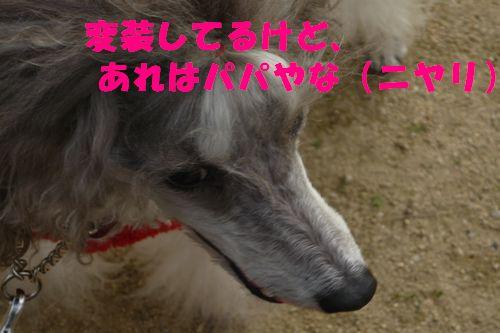 2011 12 06_セラピーの日_2187