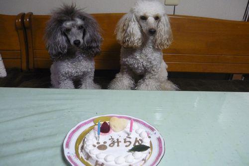 2012 01 02_みらん2歳のお誕生日_2207