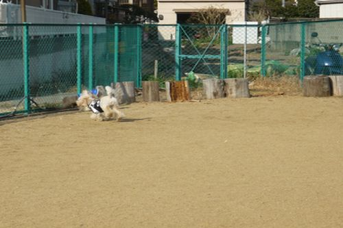 2012 02 04_2012 門戸厄神・カフェ和庵_2333