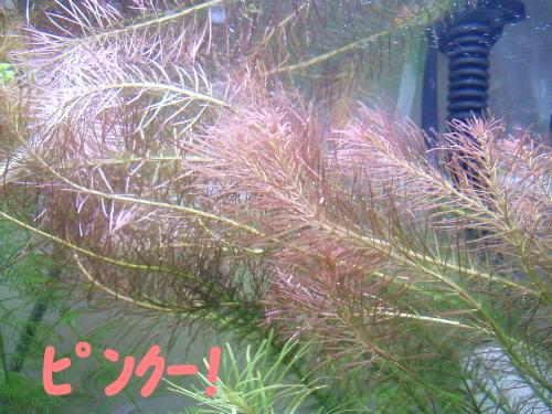 P3180092-1.jpg