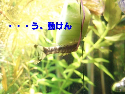 PA010047-1.jpg