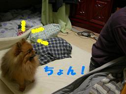 ブログ 014new