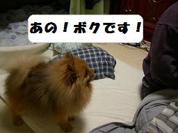 ブログ 016new
