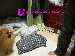 ブログ 017new